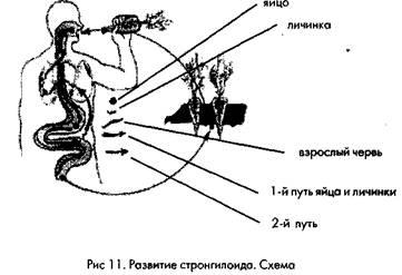 личинки паразитов кале человека