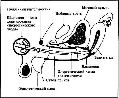 vagina-vnutri-polovoy-akt